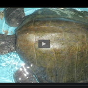 video-tortugas