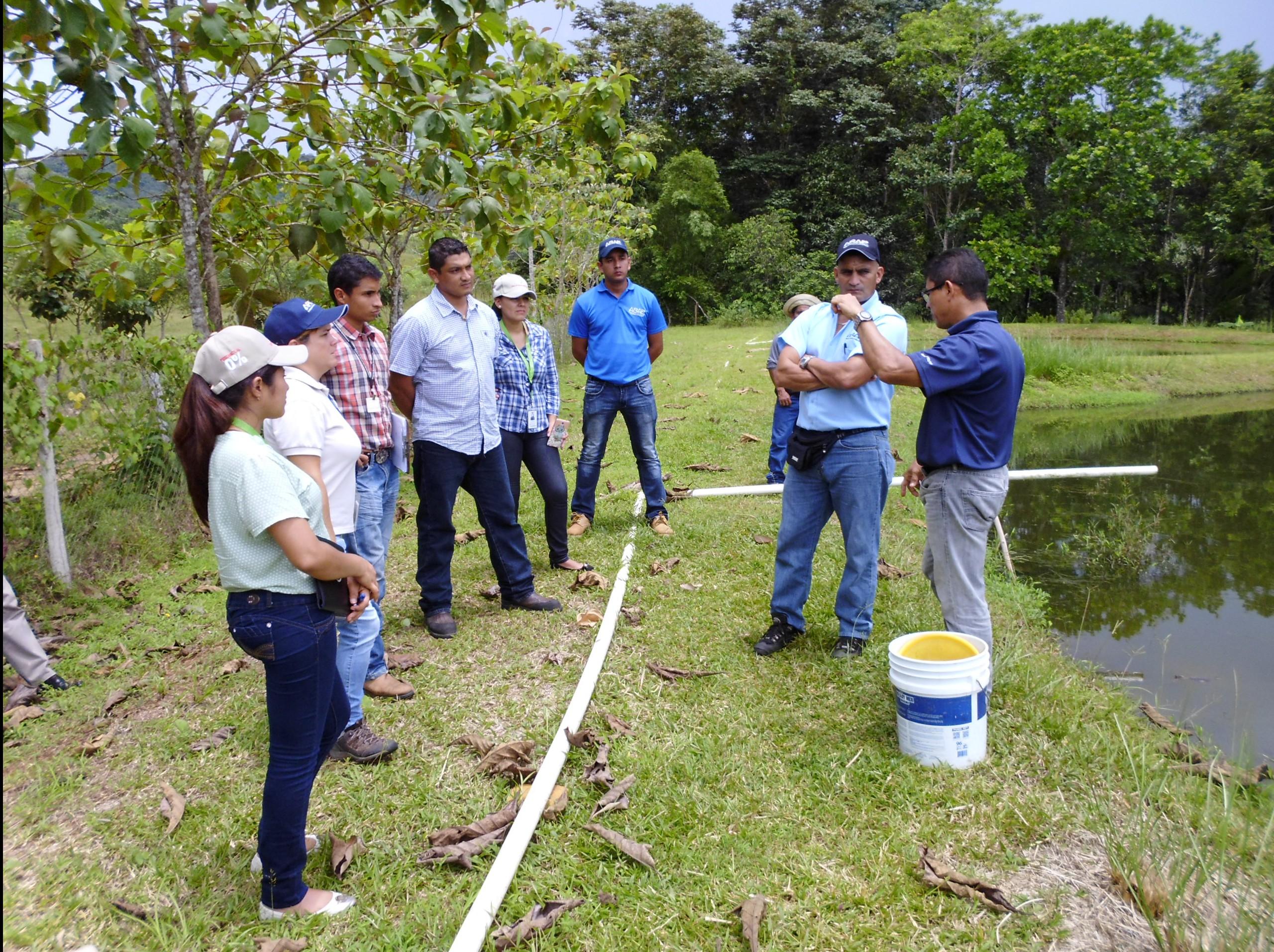 Autoridad de los recursos acu ticos de panam for Proyecto de tilapia en estanques